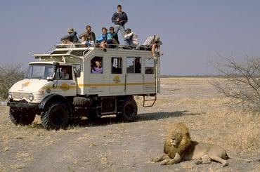2616-0015-safari-593x393.jpg